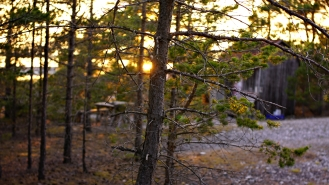 sweden_faro_gotland_sunset_pines